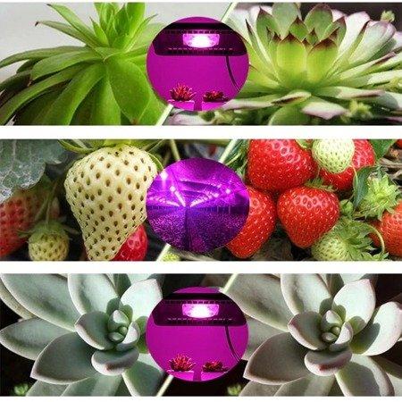 Dioda LED COB 20W - 230V - full spectrum - 380-840nm - pełny zakres - do uprawy roślin i kwiatów